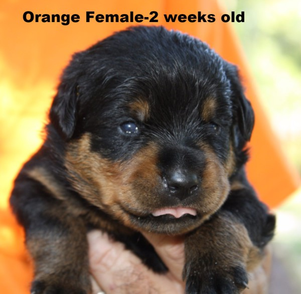 Orange Female